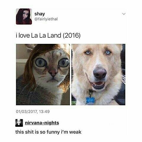 39 Random Funny Memes That Will Die Laughing-4