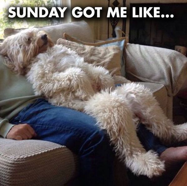 20 Funny Sunday Memes To Make You Weekend Complete