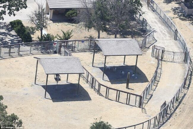 Here's abandoned Neverland ranch recent photos -4